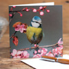 Bird Lovers Greeting Cards Blue Tit on Blossom Card